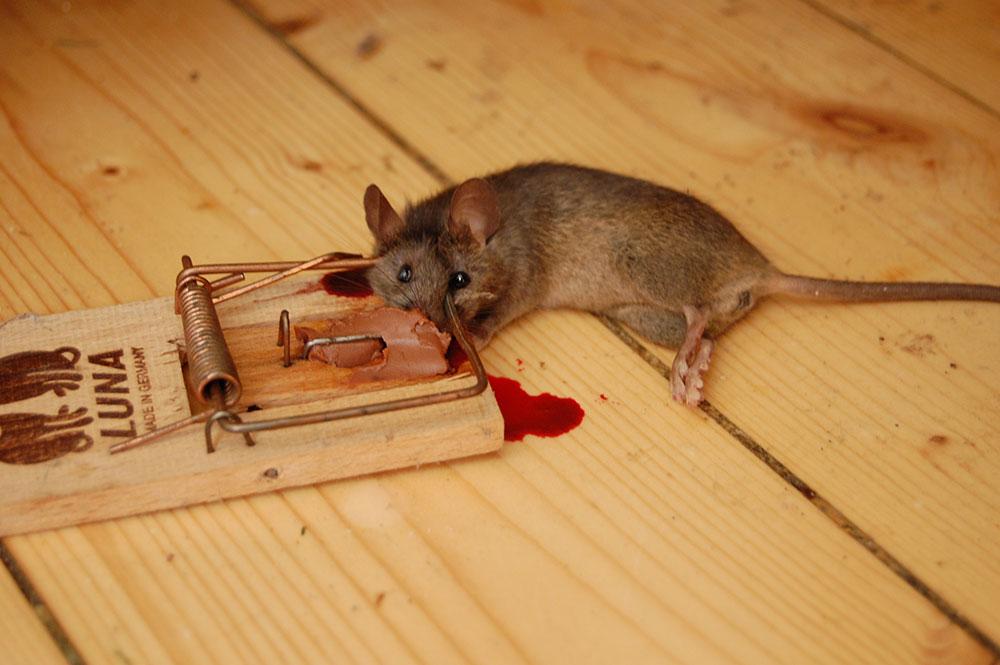 Sendung mit der Maus abgesagt