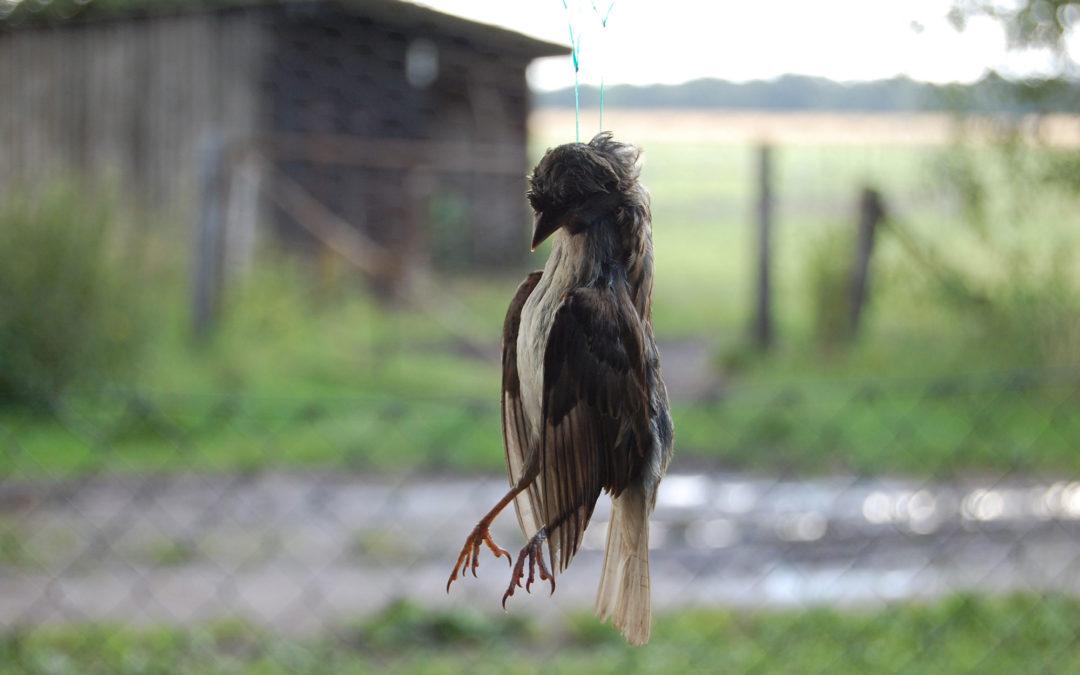 Selbstmordwelle bei Vögeln?
